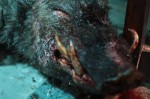 12 mini reviews from BIFFF 2011     prey25 150x99 thriller reviews sci fi reviews horror fantasy drama comedy action